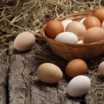 Сальмонеллёз яйца 5 мифов