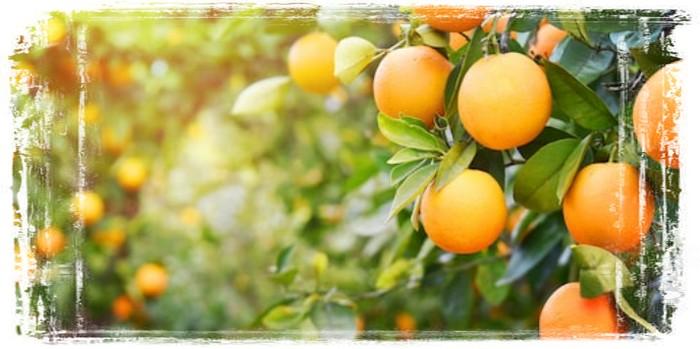 Польза апельсинового сока