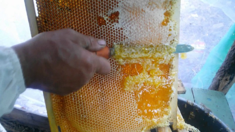 засахаренный майский мёд